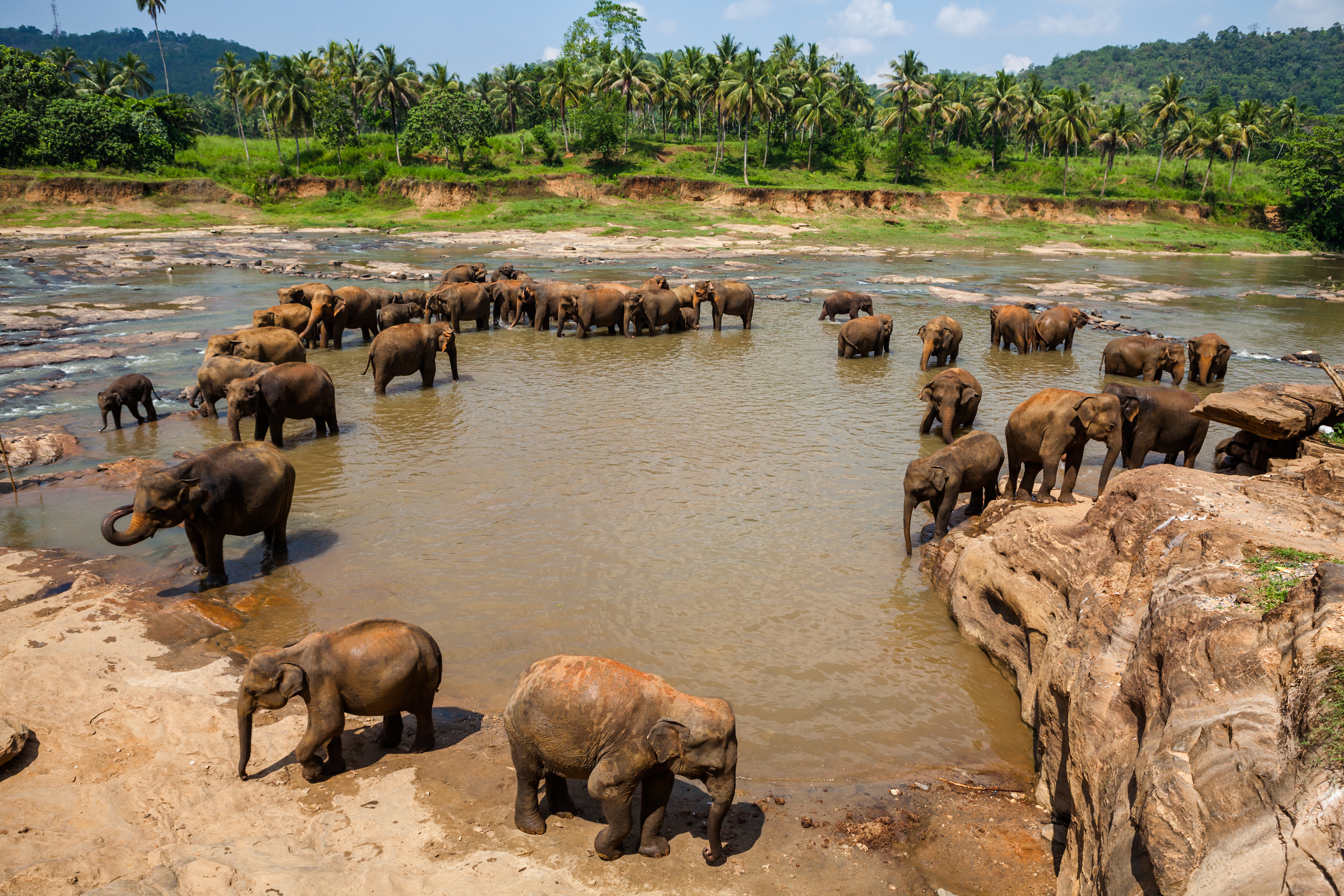 elephants-of-pinnawela